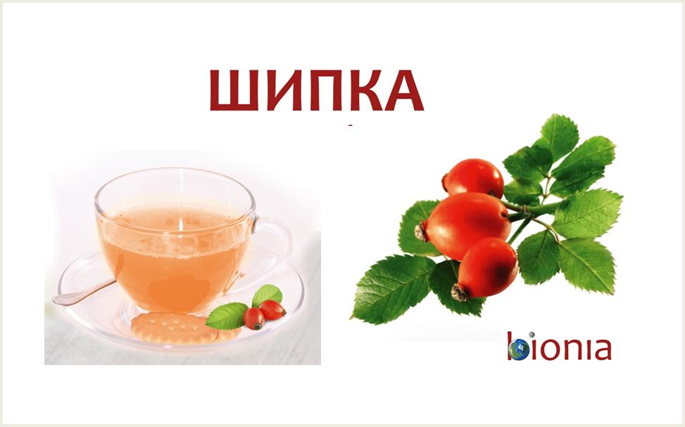 Bionia Shipka Tee2