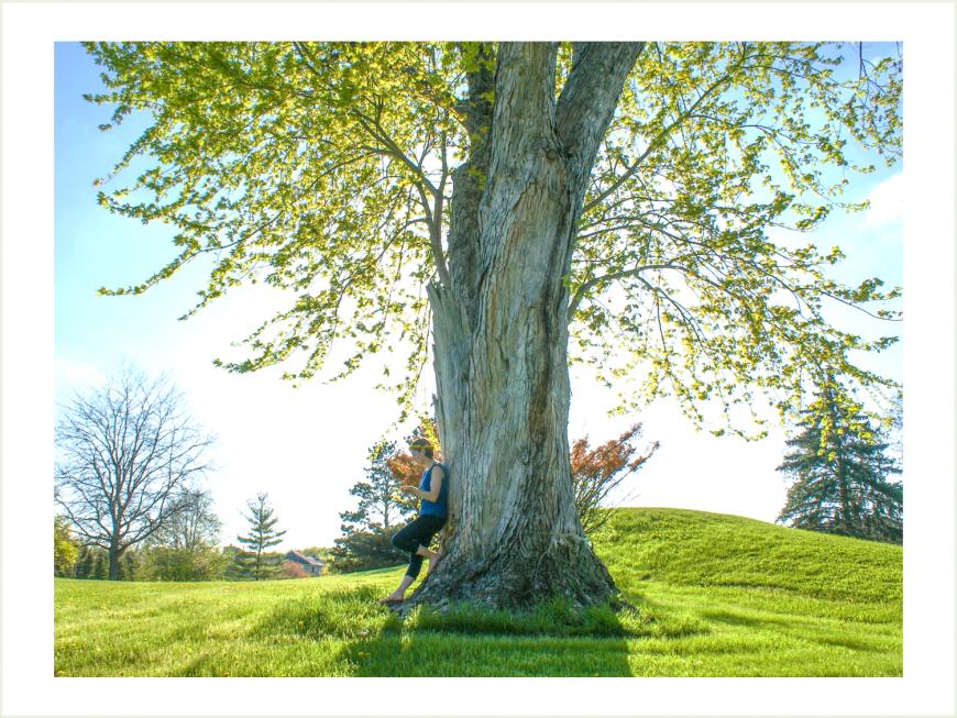 tree_bionia_lechenie3